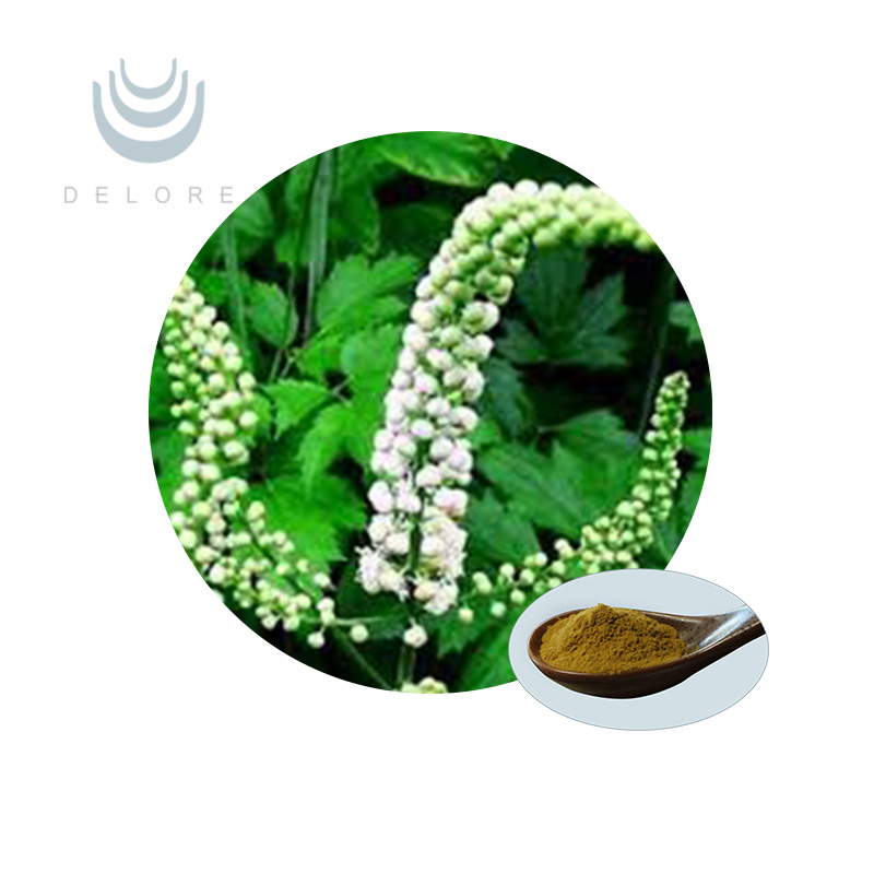 Herbal Cimicifuga Racemosa Root / Black Cohosh Extract Triterpenoid Saponins