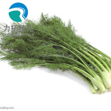 Pure natural Fennel seed extract/Foeniculum vulgare Extract