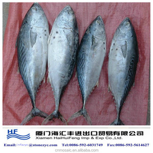 frozen bonito for sale