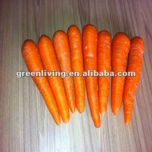 red carrot,growing carrots
