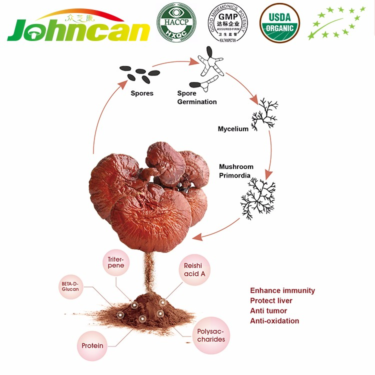 100% Natural Red Reishi Mushroom Extract Manufacturer
