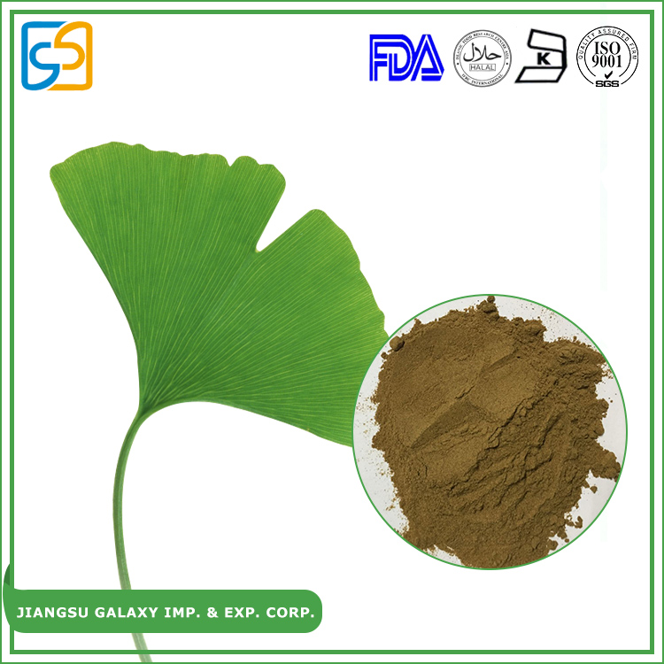 Hot sale free sample natural herbs powder extract ginkgo biloba leaf
