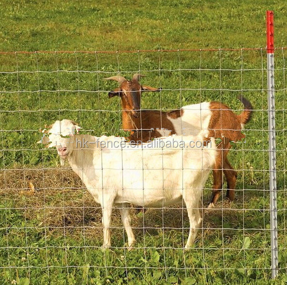 Wholesale hot-dipped galvanized goat sheep cattle farm field fencing