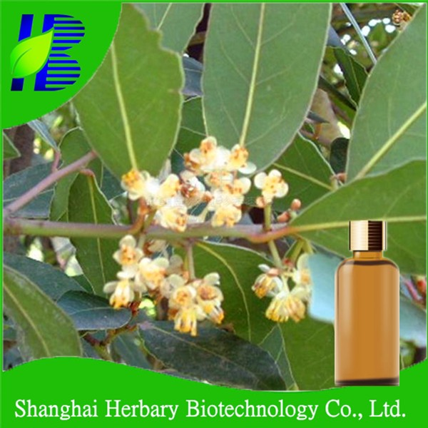 Bay leaf oil/laurel bay oil for health