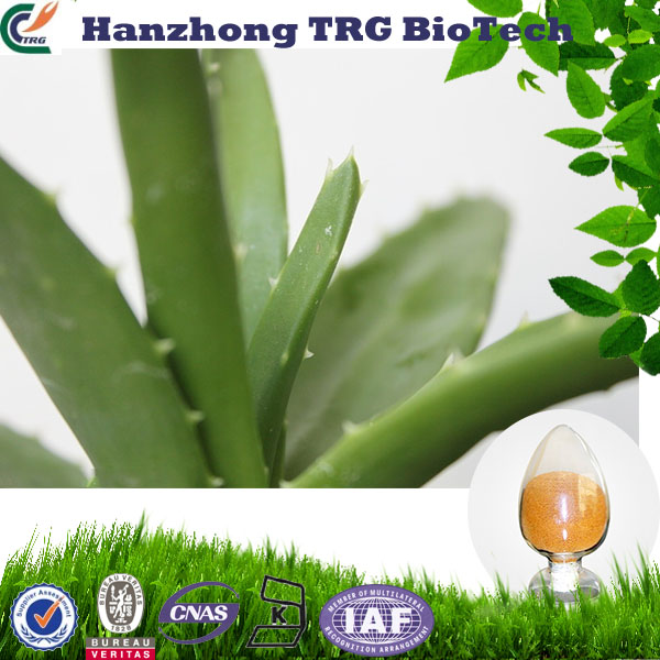 Jerusalem aloevera extract 200x with low price
