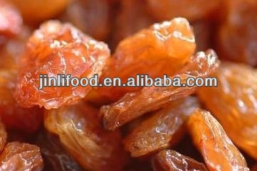 xinjiang good best raisins importer dried fruit