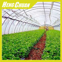 Agricultural Single Span Vegetable Growing Commercial
