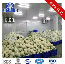 Vegetable/meat cool storage deep freezer cold room