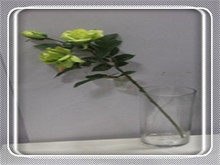 real dark blue preserved roses in glass