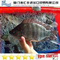Good Quality Frozen Tilapia Whole with WholeSale Price