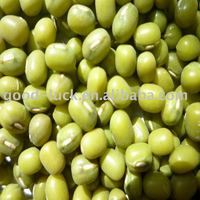 Green Mung Beans Sprout Shape