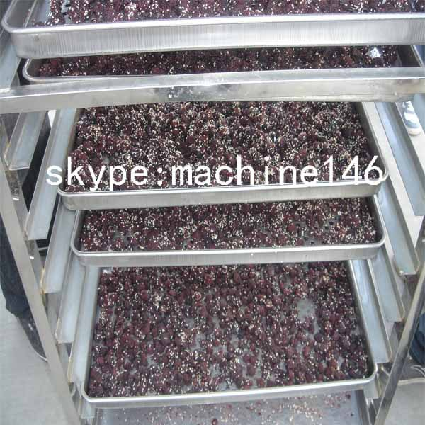 fruit dryer4.jpg