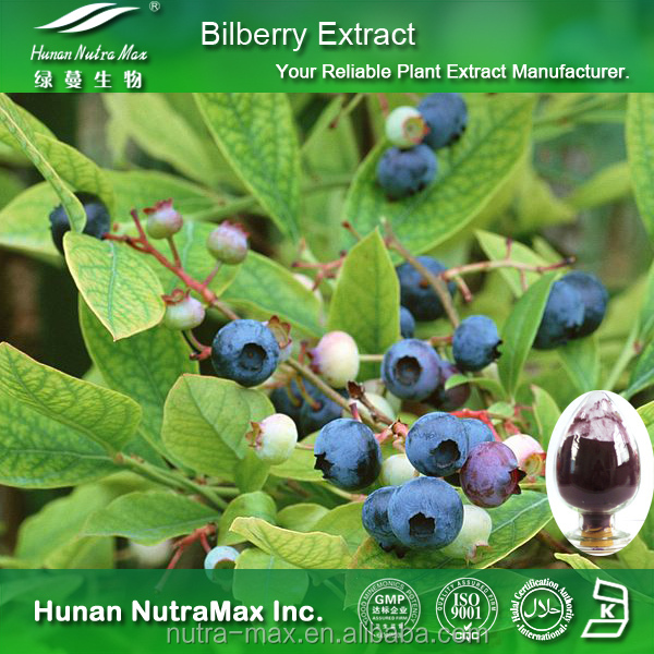 100% Natural Bilberry Extract Powder, CAS: 84082-34-8