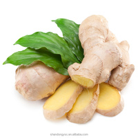 best fresh yellow ginger, black ginger price in China