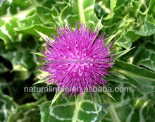 Herbal Raw Materials Milk Thistle Powder for slimming, detox, fatty liver
