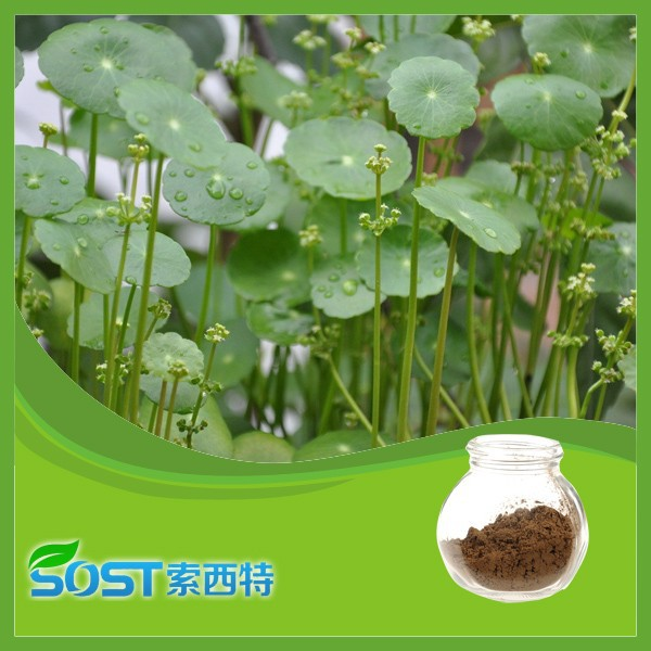 Alibaba China supplier natural GMP hot sale Asiaticoside 10%-90% with gotu kola extract powder