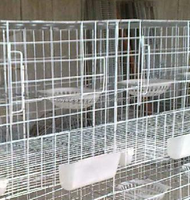 pigeon cage /poultry cage for breeding pigeon
