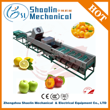 New Style fruit citrus and vegetable sorting machine with best service