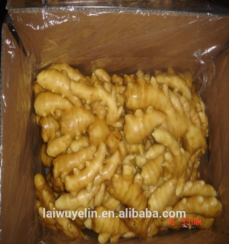 2017 Shandong CHINA fresh ginger
