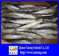 Sales fresh Pacifc pilchards 6-8 pics Frozen sardine fish