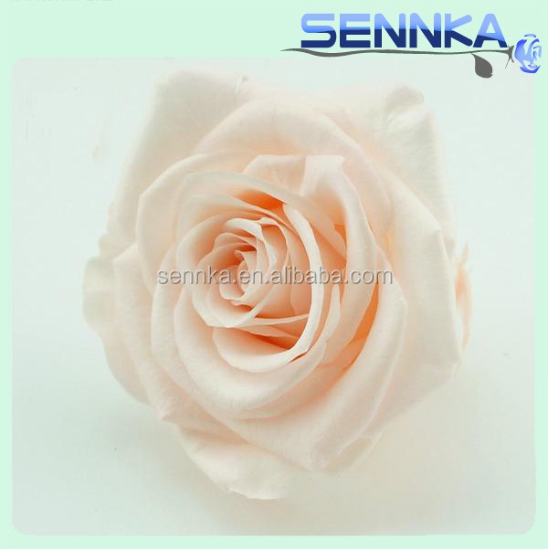 Wholesale preserved flowers freeze dried roses preserved champagne roses
