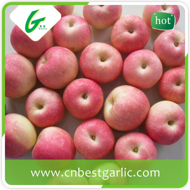 Chinese fresh sweet red gala apple
