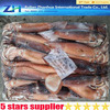 seafood company suppliers, frozen illex squid whole round sale