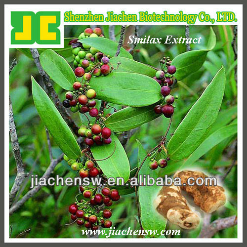herb extract Smilax P.E. 4:1,10:1
