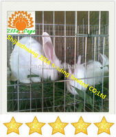 china suppliers cheap price Automatic rabbit breeding farming cage