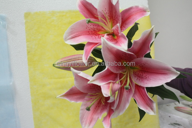 Reasonable price classical cala lily lily fresh cut flowers