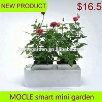 Smart Mini Garden country agents wanted in South Africa