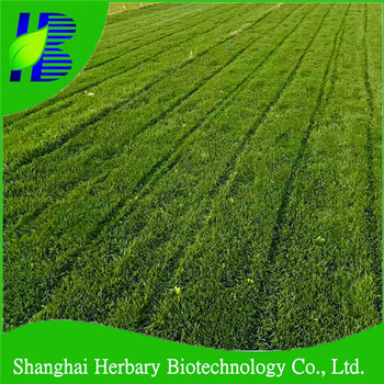 Supply all kinds of grass seeds with competitive price and excellent service