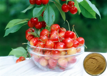Wholesale 100% Natural Vitamin C 17% 25% Acerola Cherry Fruit Extract , Acerola Cherry extract Powder, Acerola Cherry Pills