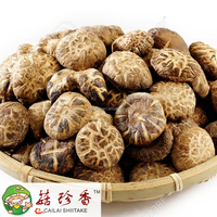 Free shipping premium dried flower shiitake mushroom spawn cultivation only cap