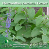 3W supply Plectranthus barbatus Extract (1%-10% Forskolin)