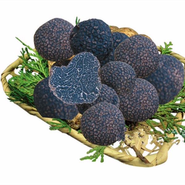 new crop black truffle with high quality and wholesale price