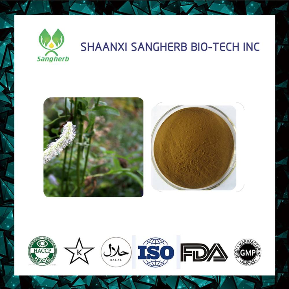 Free Samples Natural Black Cohosh Extract use for Antibacteria and anticancer