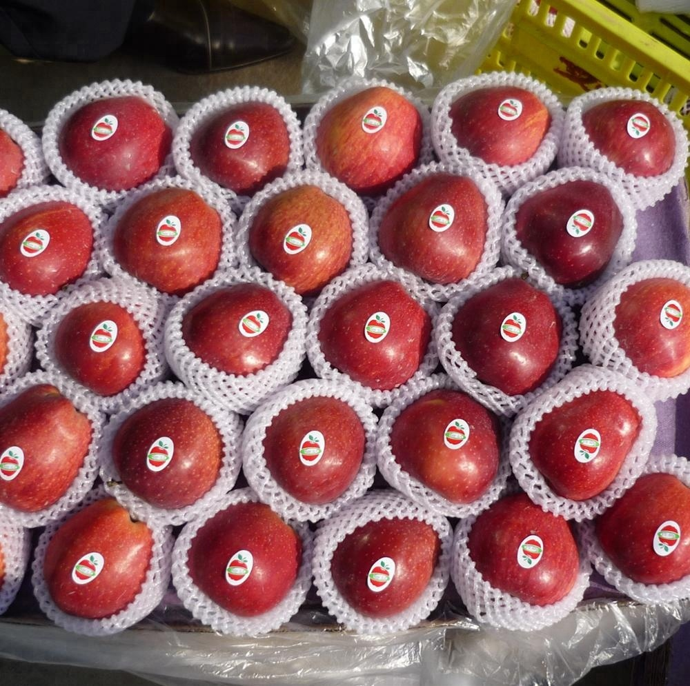 chinese early apple/Huaguan/red star/poly fuji