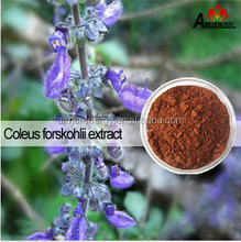 FDA Professional Manufactory Pure Forskolin Extract