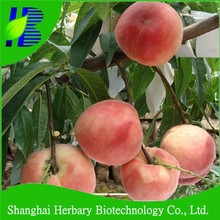 2017 Newly peach seeds for sale