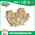 Fresh Ginger export of agriculture products/wholesale ginger price