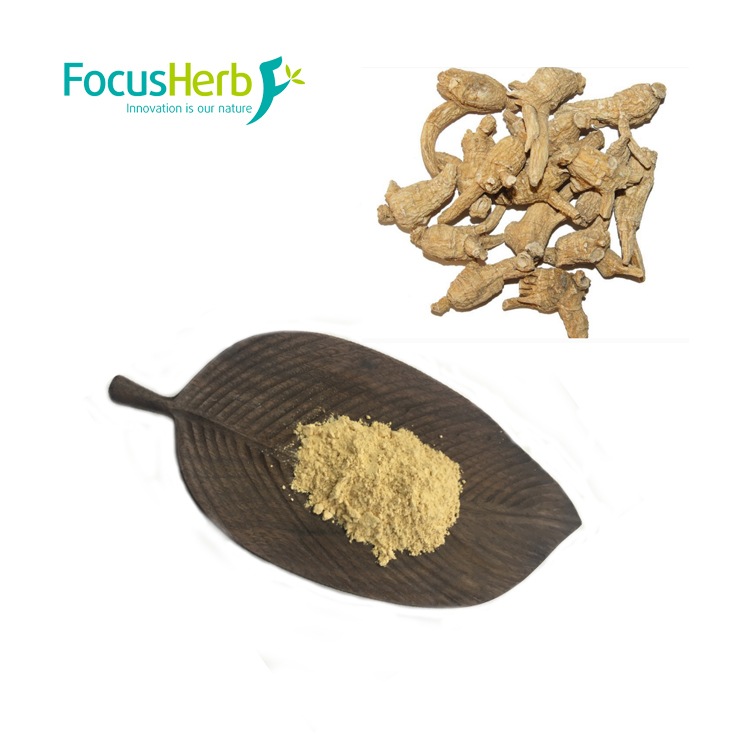 Focus Herb Dried Wild American Ginseng Root Extract, Panax Ginseng Extract