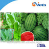 New and efficient agricultural silicone surfactants IOTA-2000