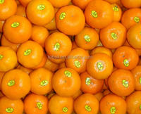 Best Fresh and Sweet Oranges ponkan