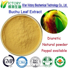 100% GMP factory supply Zea mays extract Powder
