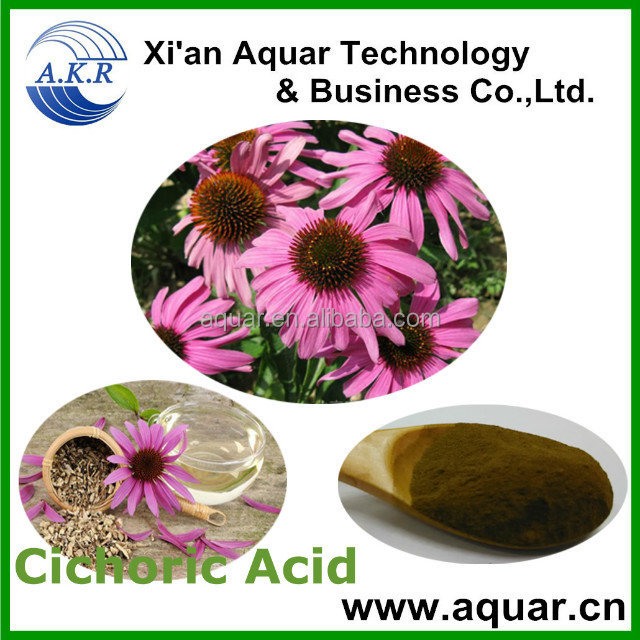 Pure plant extract Manufacturer supply Plants of the genus pinecone echinacea Extract -free sample
