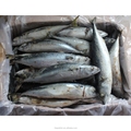 Fat and tasty pacific mackerel on sale
