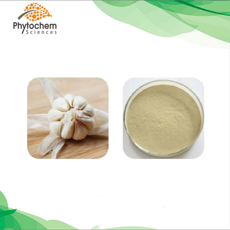 wholesale garlic extract powder