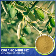 Herb plant extract ingredient additive olive leaf extract / oleuropein 25%HPLC