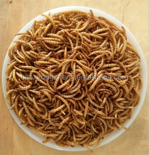 Mealworm Variety and Worm Type Bread meal worms